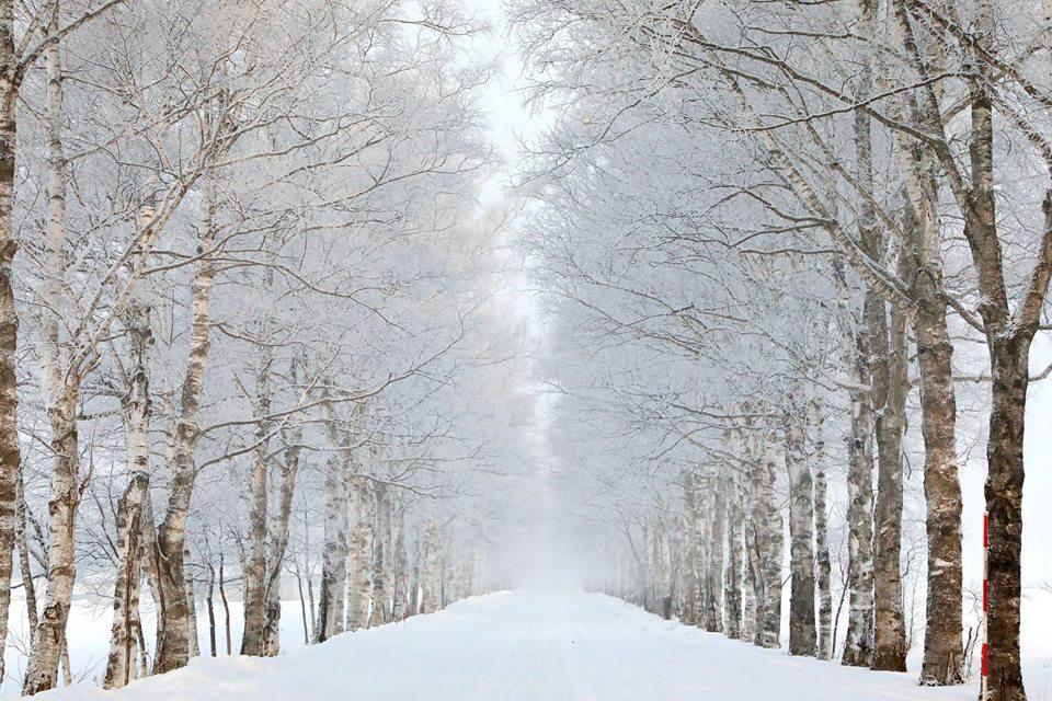 白樺並木 冬